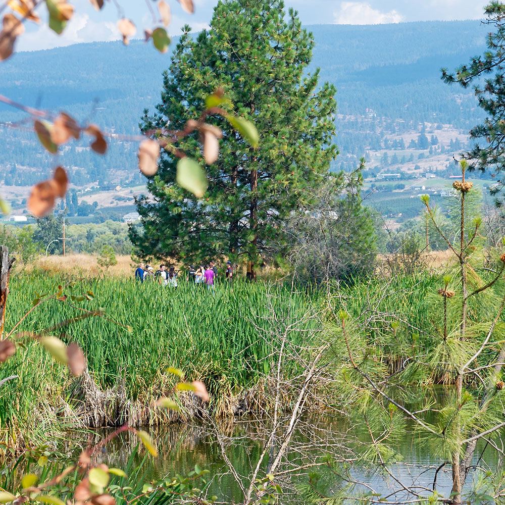 okanagan, nature, on-campus, pond